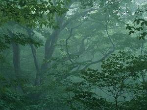 Yêu tinh rừng sâu.